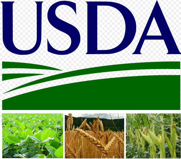 usda government inspected essay