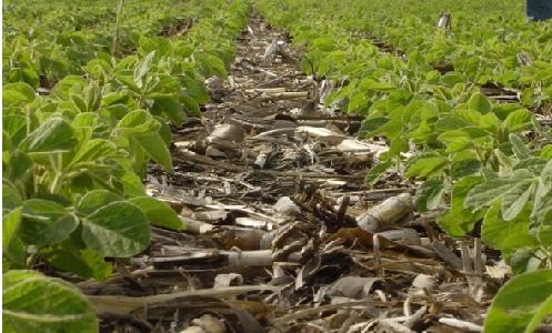 Un ensayo de casi 20 años determinó que la siembra directa combinada con la rotación bianaual soja-maíz y un cultivo de cobertura invernal, incrementa la captura de carbono y permite la acumulación de agua en el perfil, disminuye la erosión y movimiento superficial de planchado (fuente INTA)